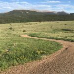 Dog tests positive for plague, likely exposed during hike in Colorado